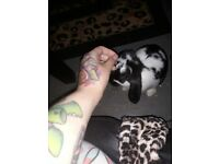 2boy 4mo buns free dbl hutch all toys vacs chiped and spayed savings over 200 will not seperate