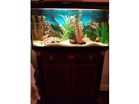 2.5 ft fish tank and unit