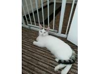 6mth old neutered male cat