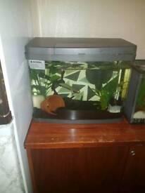 Beautiful Love Vantage 48l Fish Tank