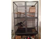 3 degus and large cage