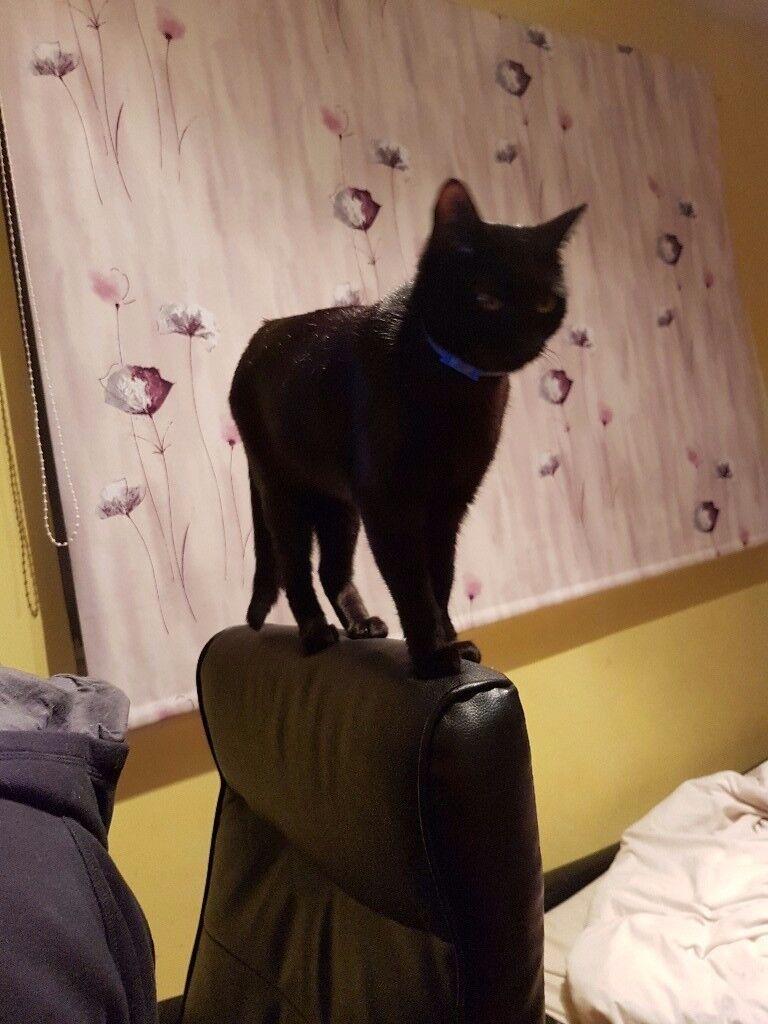 Missing female cat Noya
