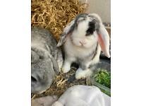Bonded Rabbits + hutch
