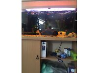 200l fish tank and accessories for sale