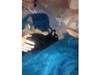 2x baby Rabbits