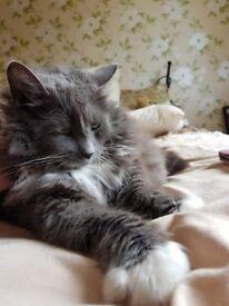 Pet Sitter / Cat Sitter available in West Lothian