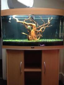 Fish tank juwel bow front