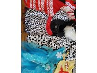 Girls bundle of costumes for girls 3-5