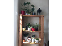 Shelving unit in mint condition
