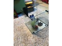 Small fish tank with filter