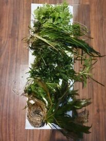 Various LIVE aquarium plants