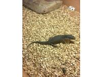 Bosc monitor with viv- delivery