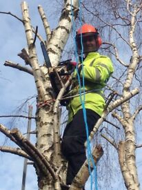 Tree Logs Wanted - Trees felled - best prices given