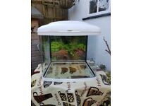 Tropical Fish Tank Acquarium and starter accessories