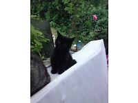 4 beautiful affectionate kittens