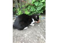 FREE kitten cat batley wf17 yorkshire collect only cannot deliver