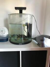 Tetra fish tank inc filter air pump and 2 cold water mountain minnows