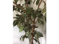 Artificial tree 5ft