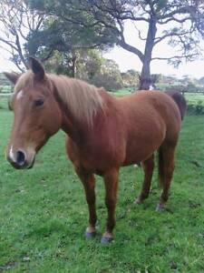 Quarter Horse Augusta Margaret River Area Preview