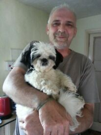 Shih Tzu puppies for sale 2 girls 3 boys
