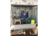 FULL RAT CAGE SET UP AND 2 MALE RATS