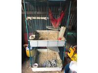 Rabbit Guinea pig ferret cage for sale