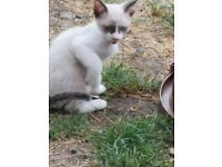 2 lovely kittens looking for a home