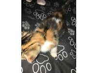 2 beautiful kittens for sale READY TO LEAVE NOW!!