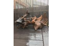 Large bogwood