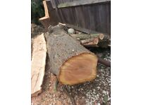 Wood log burner stumps trunks