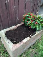 30 year old Horse Manure for Gardens