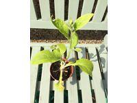 Clearance garden plants
