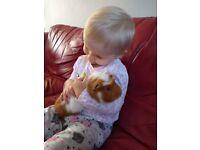 2 baby girls guinea pigs
