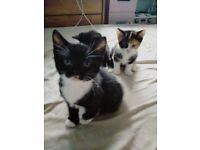 3 adorable kittens £280-£350 prices negotiable