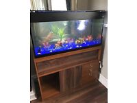 Fish tank and stand Aqua one, full setup beamswork led light