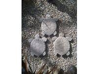 Large Homemade Concrete Turtle/Tortoise Garden Stepping Stones Statue