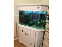 White Corner fish tank with 8 fish,plants,ornaments