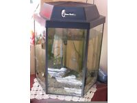 Hexigan Fish Tank with Accesseries