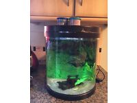 19Litre fish tank with two fish
