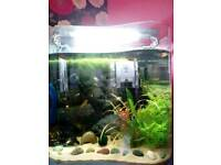 Tropical fish for sale - Description