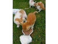 Sale for kitten
