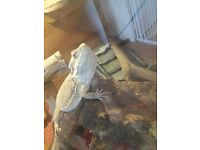 I have a bearded dragon and a setup to go with him looking for about £40 to £50 for it all