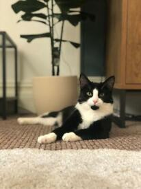 1 Year Old Cat - Toots