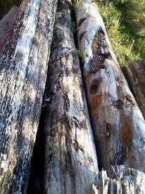Sea Defence Sleepers/Wooden Beams