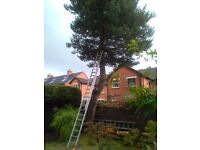 TREE SURGEON-GARDEN SERVICES/HEDGES-ETC. Den-07340-357-323