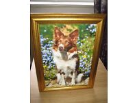 New 4 Dogs Framed Pictures A4 Border Collie - Springer Spaniel - King Charles Spaniel - Schnauzer
