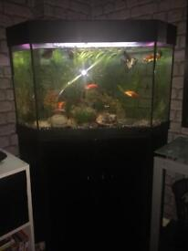 Black corner fish tank and everything you need