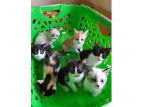 lovely kitten loocking for a home check description