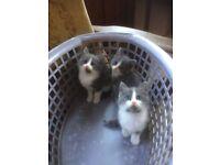 3 Gorgeous kittens