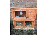 Brown female rabbit with hutch